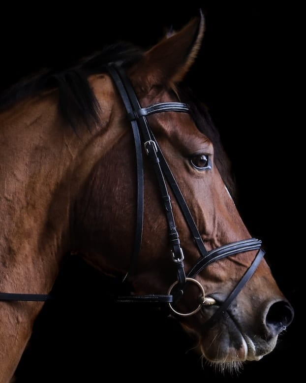 assets protected in bankruptcy: your race horse can be taken from you!