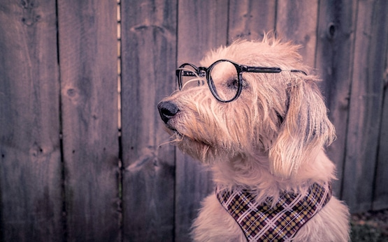 what is a reverse mortgage dog wearing glasses