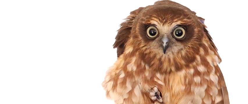 subject to mortgage: owl on branch