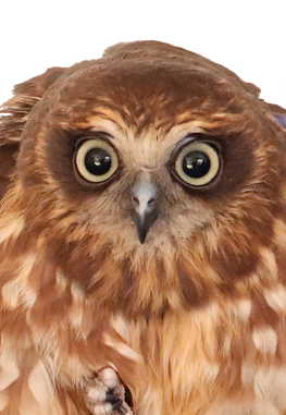 subject to mortgage: owl face
